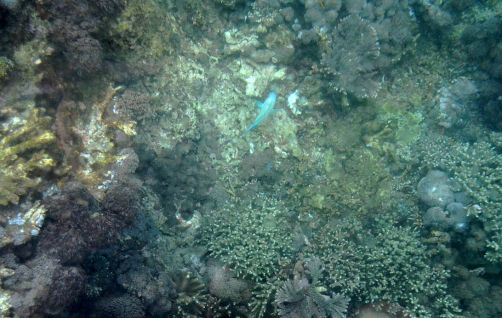 indonesie-nusa-lembongan-bali (32)