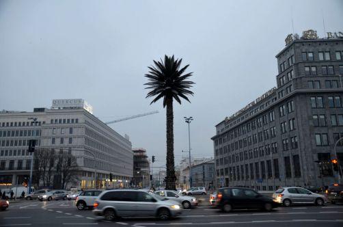 ... et de surprises ! Comme ce palmier artificiel trônant en plein centre ville.