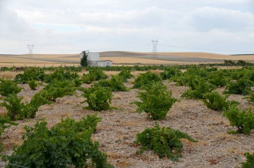 route-vins-rueda-espagne-109