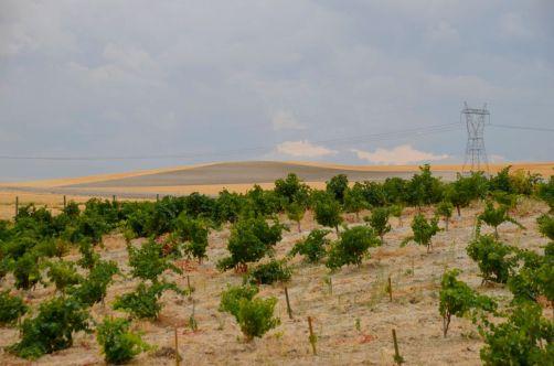 route-vins-rueda-espagne-114