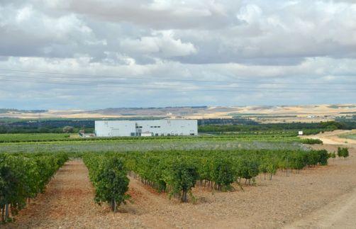 route-vins-rueda-espagne-278