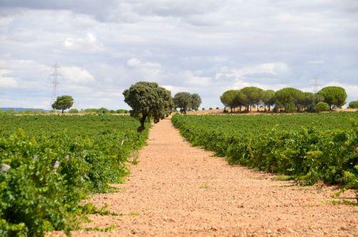 route-vins-rueda-espagne-283