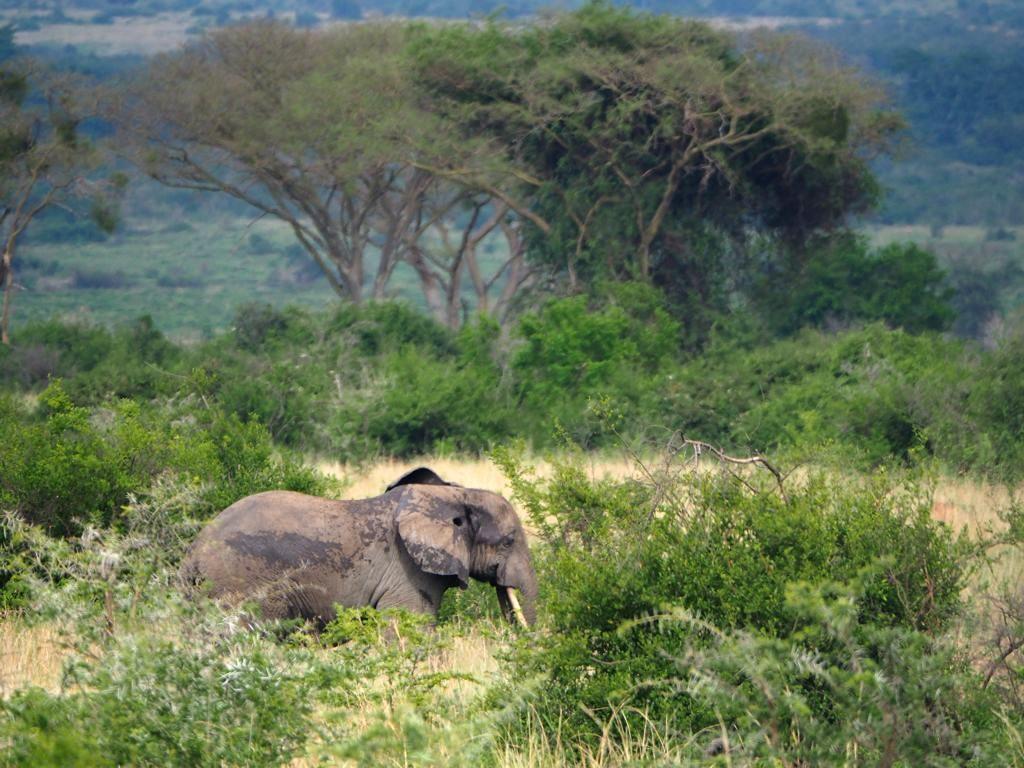 safari en ouganda hors des sentiers battus ishasha. Black Bedroom Furniture Sets. Home Design Ideas
